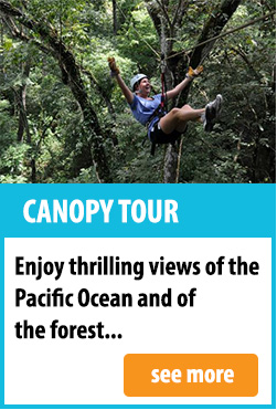 Canopy Tour In Mal Pais
